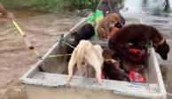 Rescate perritos Tabasco