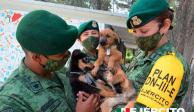 SEDENA crea refugio de perritos