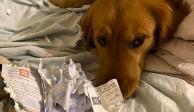 Joven se salva del coronavirus gracias a una travesura de su perrito