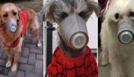 Entre abandono y medidas extremas, así sobreviven los perritos al coronavirus chino