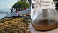 Alumnos del Tec de Monterrey transforman sargazo en material para cosméticos