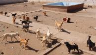 Hallan rastro de perros en Chihuahua; había cuchillos y restos de canes (VIDEO)
