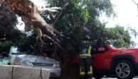 Caen al menos 34 árboles en CDMX por fuertes vientos