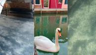 Limpios y con agua cristalina, así lucen canales de Venecia por cuarentena (FOTOS Y VIDEOS)