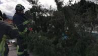 Fuertes vientos provocan caída de árboles y espectaculares