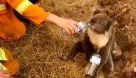 Héroes-Dos-jóvenes-han-rescatado-varios-koalas-en-Isla-Canguro-Australia-al-introducirl