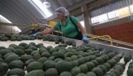 Cerveza y aguacate impulsan exportación agroalimentaria de México