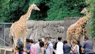 Alistan remodelación de zoológicos de Aragón y Chapultepec