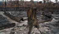 Cómo el fuego en la Amazonia pone en peligro las metas del Acuerdo de París