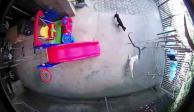 VIDEO: Dos perros pelean contra una cobra para salvar a sus dueños