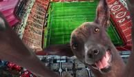 Equipos de México celebran el Día Mundial del Perro