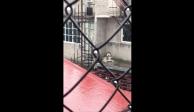 ¿Qué pasó con el perrito husky que dejaron mojar en cornisa en Iztapalapa?