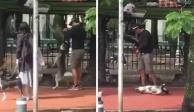 Detienen a hombre que ahorcó a perro husky en La Condesa