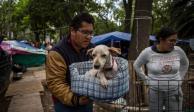 Conoce quién ayudó a las mascotas desaparecidas del 19S