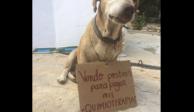 """""""Deko"""", el perro que vende postres y reúne dinero para sus quimios"""