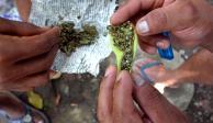 Suben 28% detenciones por posesión simple de drogas