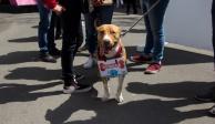 Perros rescatados en el Metro llevarán cartas a Santa y Reyes Magos