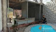 VIDEO: Rescataron a puma suelto en cochera de SLP