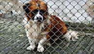 #MaskotaNoVendasAnimales: con hashtag piden parar venta de animales
