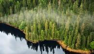 Trump levanta histórica prohibición para talar árboles en el mayor bosque de EU
