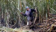 Piden cañeros apoyos urgentes por sequía prolongada en el país