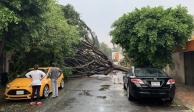 ... Y fuertes vientos derriban árboles en Coyoacán y Tlalpan
