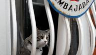 """Ecuador acusa de """"espía"""" al gato de Julian Assange"""