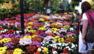 A partir de hoy, 20 policías recorren Mercado de las Flores de Cuemanco