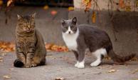 Buscan a sujeto por quemar a 40 gatos vivos en Marruecos