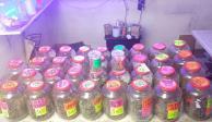 Realizan nuevo operativo en Tepito; decomisan mariguana de sabores