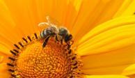 Veneno de abeja, con efectos positivos contra el Parkinson, revela estudio