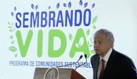 """Anuncia AMLO inicio del programa """"Sembrando Vida"""""""