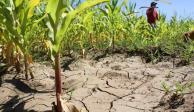 """México y el mundo sufren """"estrés hídrico"""" por sobrepoblación"""