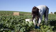 Trabajo infantil, pobreza y desigualdad en el agro mexicano