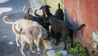 Alcalde ordena exterminio de 200 perros callejeros en Jalisco