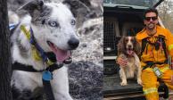 """""""Bear"""" y """"Taylor"""", héroes caninos que salvan koalas en Australia"""