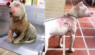 Juez resuelve que sujeto que quemó a pitbull es un peligro y lo deja preso
