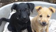 Cachorrita muere de un infarto ocasionado por ruido de fuegos artificiales