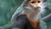 A prisión 3 hombres que transmiten en Facebook Live cómo matan y comen a mono