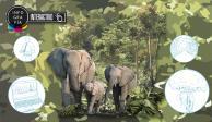 Interactivo: En Extinción, Elefantes Que Ayudan a Regular Cambio Climático