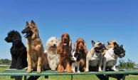 ¡Qué perrón! Abren licenciatura en Adiestramiento y Manejo Canino