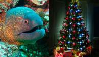 Anguila eléctrica sorprende al encender luces de árbol de Navidad