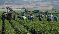 """Reforma Laboral """"amenaza"""" al sector agrícola, señalan agroindustriales"""