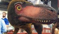 Descubren una especie de tiranosaurio ¡que medía menos de un metro!