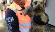 Rescatan a perro atrapado en las vías del Metro Aragón