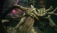 Asegura Profepa 62 reptiles y una rana a Six Flags