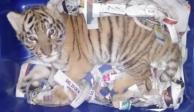 VIDEO: Intentan mandar cachorro de tigre ¡por paquetería!