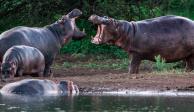 Turista chino muere atacado por hipopótamo en Kenia