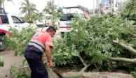 Deja Carlotta en Guerrero 41 casas inundadas, 76 árboles y 7 postes caídos...