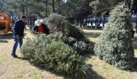 Árboles de Navidad naturales: Mitos y realidades en México